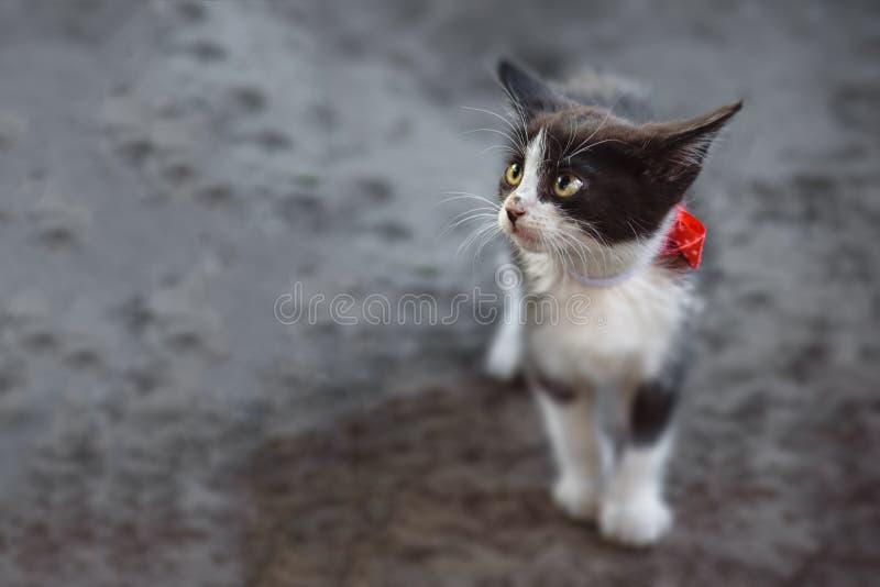 Pequeño gatito solo foto de archivo