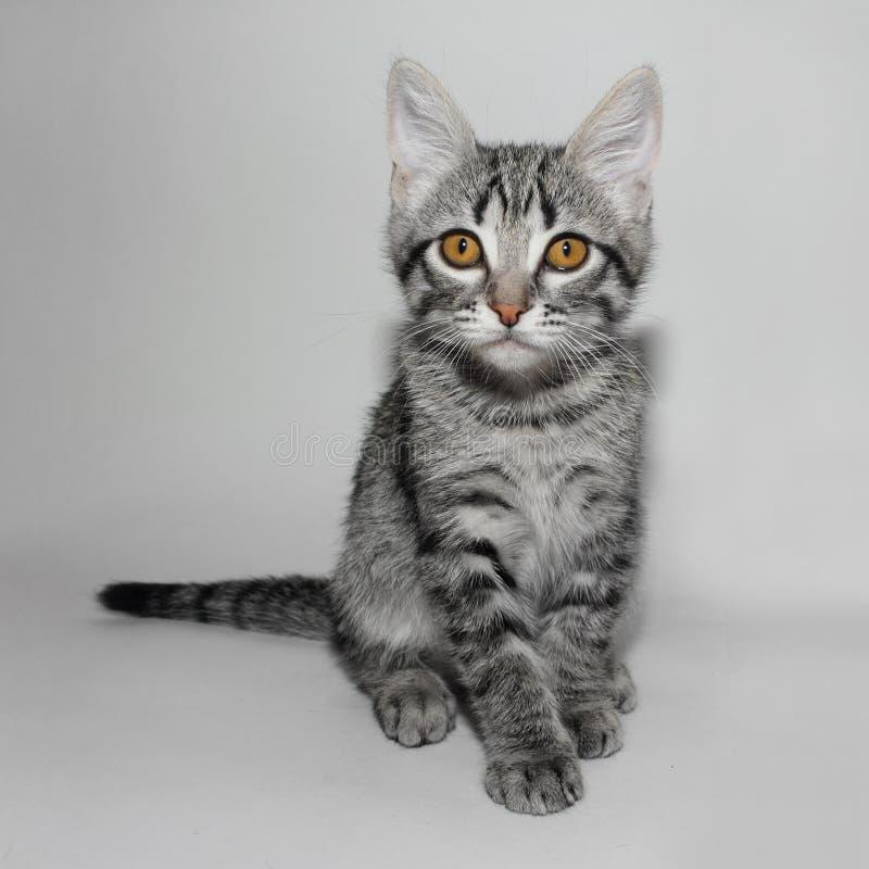 Pequeño gatito triste fotografía de archivo libre de regalías
