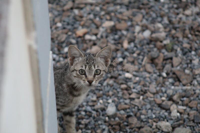 Pequeño gato imagen de archivo