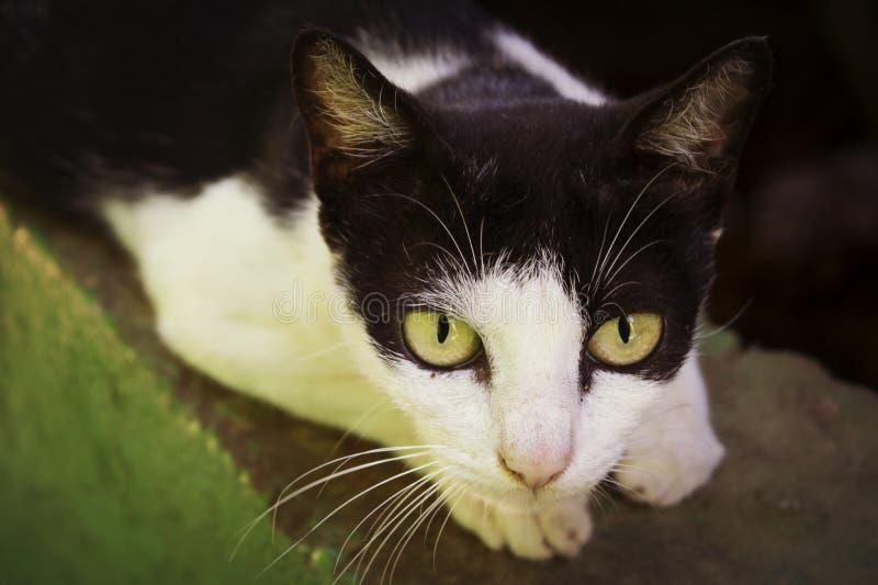 Pequeño gato fotografía de archivo libre de regalías