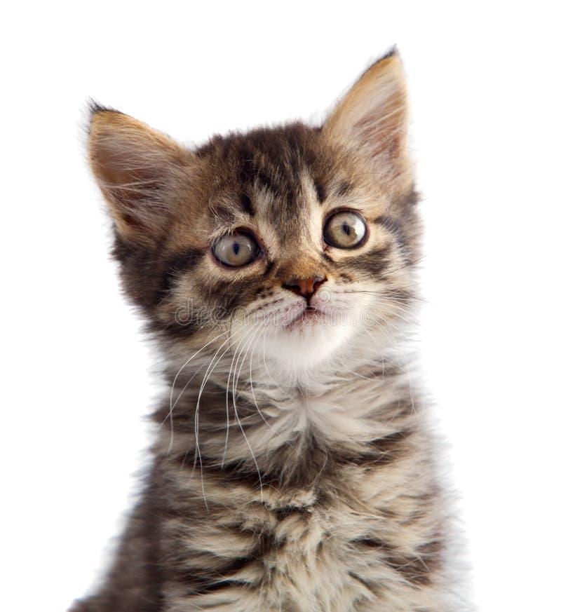 Pequeño gato adorable en la parte inferior blanca fotografía de archivo libre de regalías