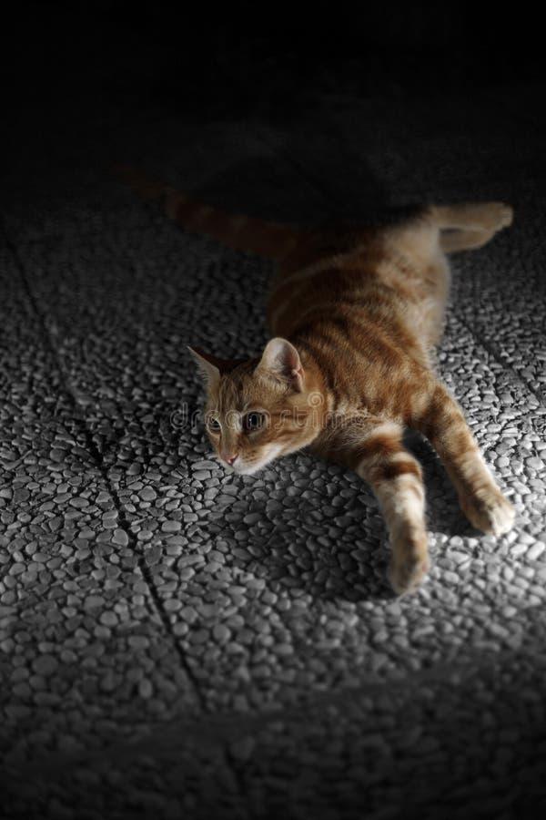 Pequeño gato anaranjado imagenes de archivo