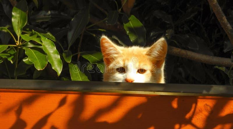 Pequeño gato anaranjado hermoso en el tejado fotografía de archivo libre de regalías