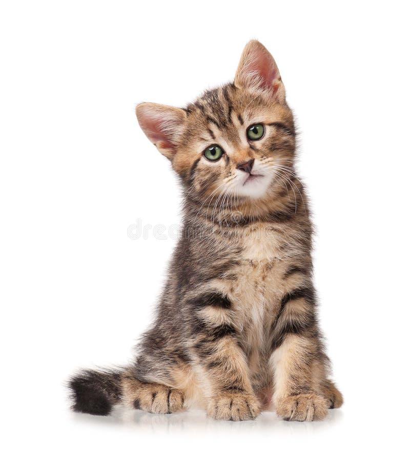 Pequeño gato atigrado fotografía de archivo libre de regalías