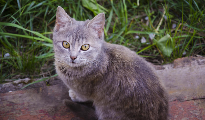 Pequeño gato curioso que mira para arriba foto de archivo