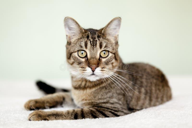 Pequeño gato de Tabby imagen de archivo