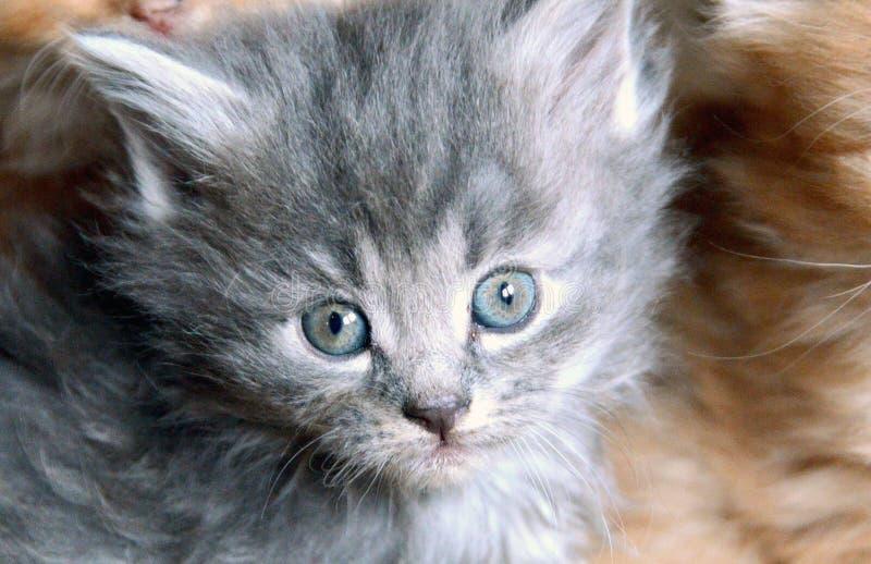 Pequeño gato dulce imagenes de archivo