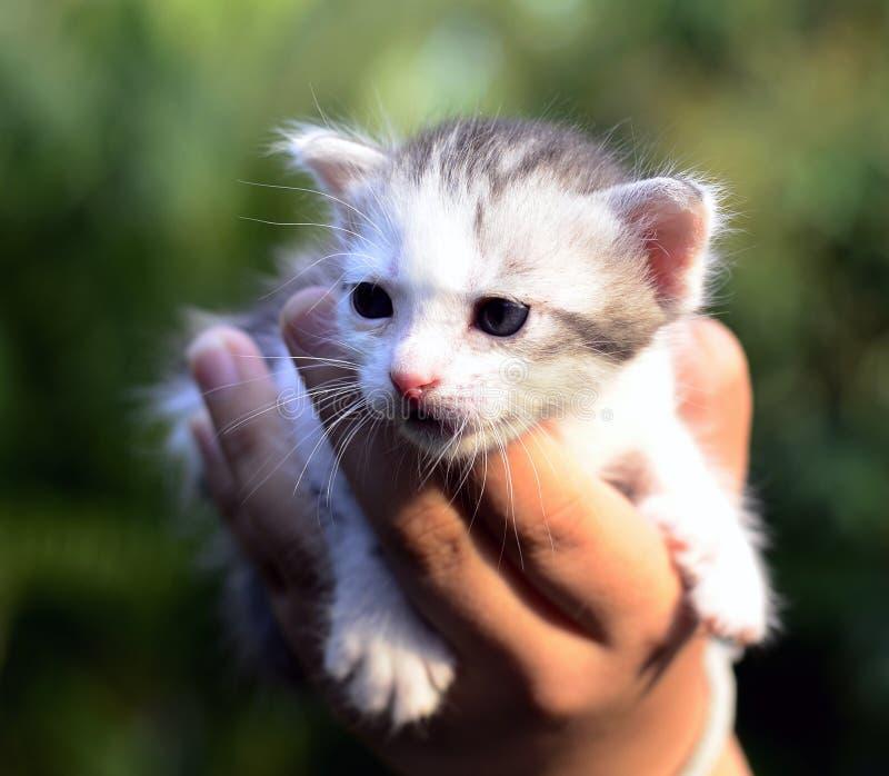 Pequeño gato en palma y fondo verde. imagen de archivo