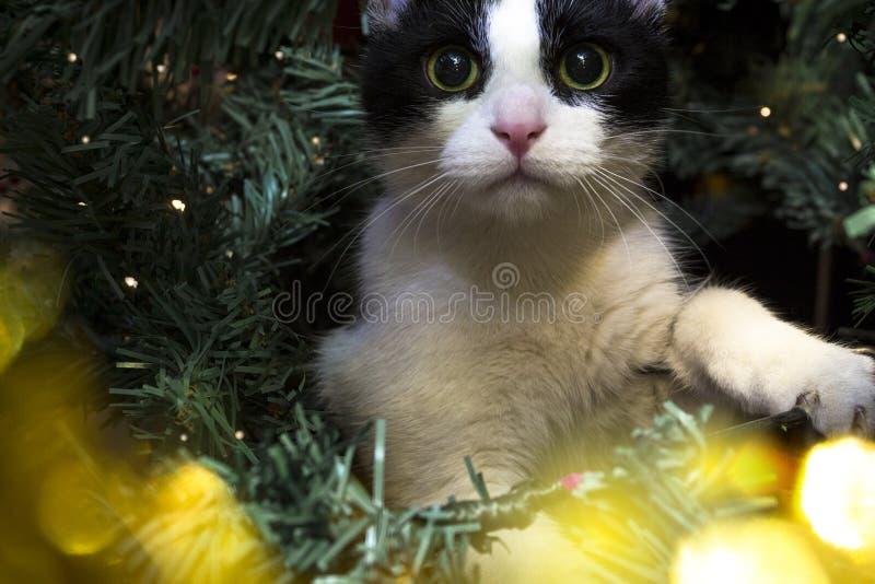 Pequeño gato lindo sentado en un árbol de Navidad foto de archivo