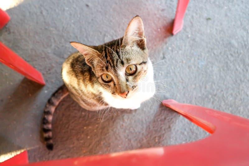 Pequeño gato o gatito imagenes de archivo