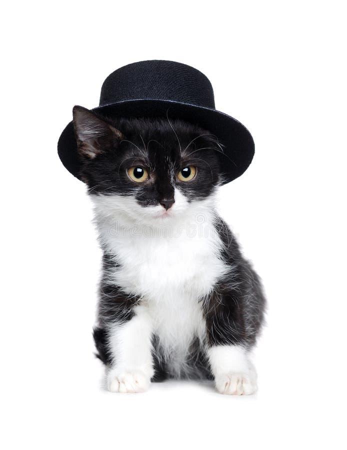 Pequeño gato que lleva el sombrero de fieltro negro foto de archivo