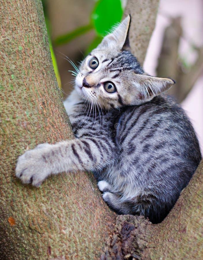 Pequeño gato tailandés. fotografía de archivo