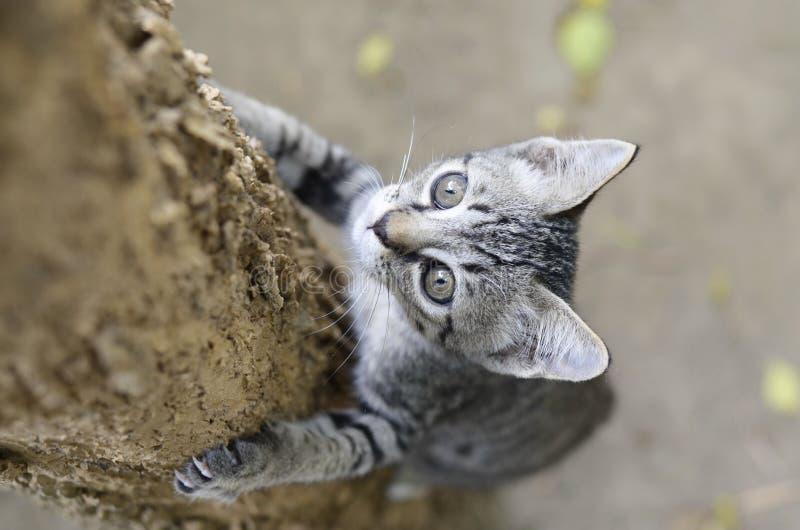 Pequeño gato tailandés en árbol. imagen de archivo