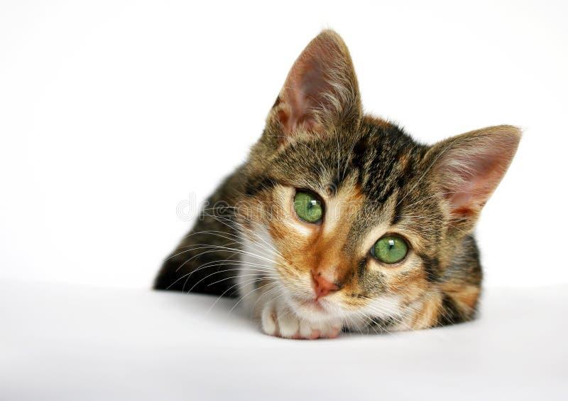 Pequeño gato triste imagen de archivo