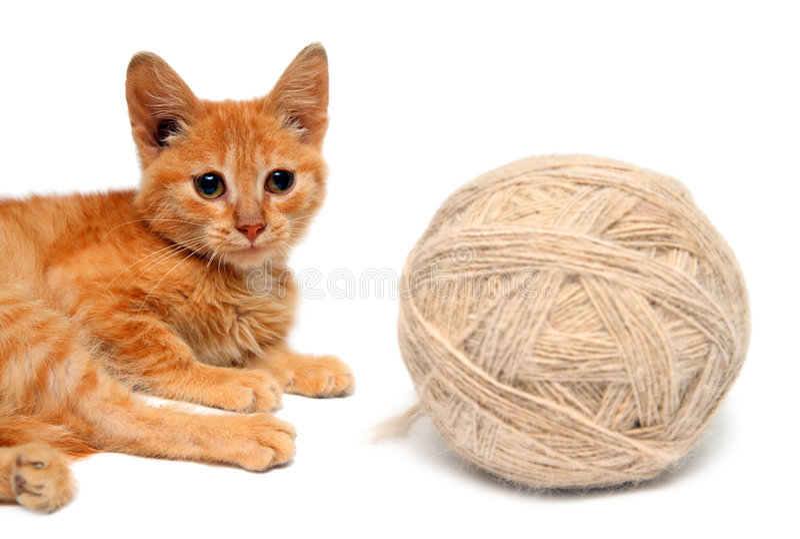 Pequeño gato y ovillo grande de lanas fotografía de archivo