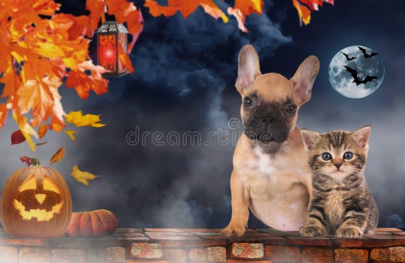 Pequeño gato y perro que se sientan al lado de la calabaza - Halloween fotografía de archivo