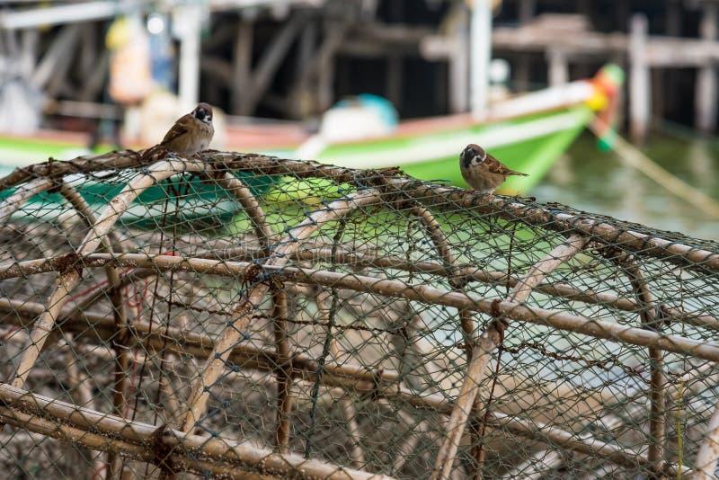 Pequeño gorrión en la pesca de las trampas para los pescados en puerto pesquero tailandia foto de archivo libre de regalías