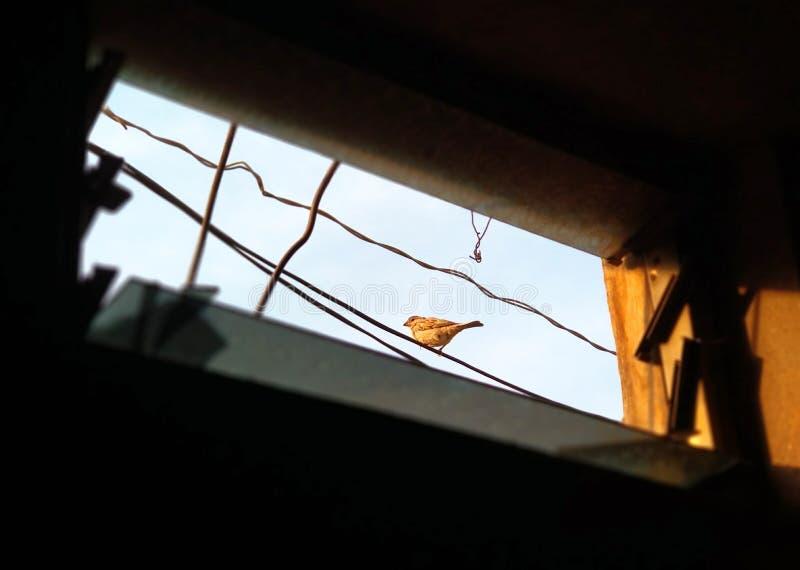pequeño gorrión localizado en el alambre foto de archivo
