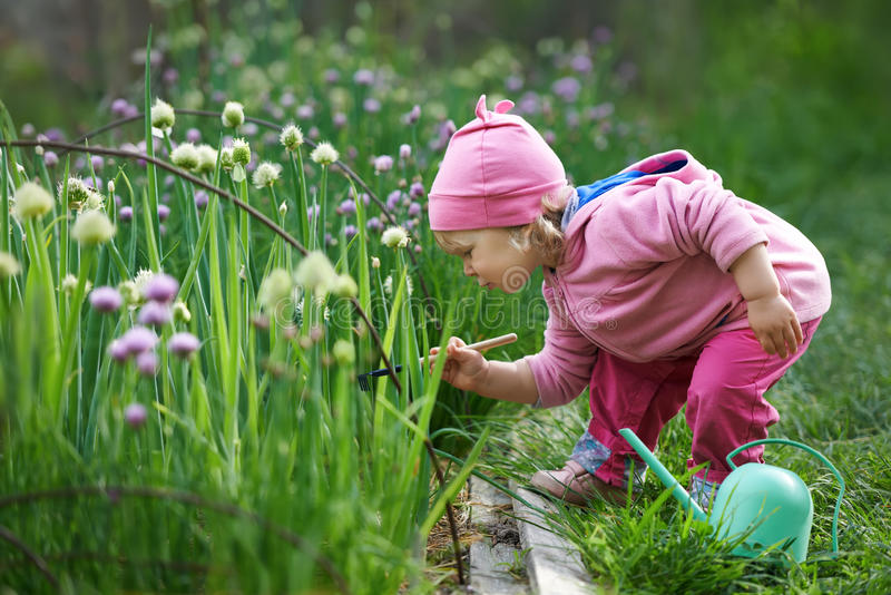 Pequeño granjero que rastrilla cebollas en el jardín
