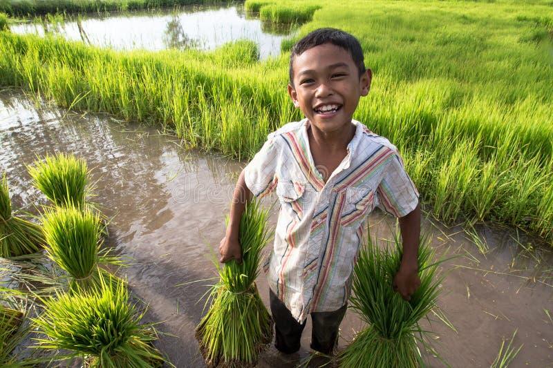 Pequeño granjero sonriente del muchacho en campos verdes fotos de archivo
