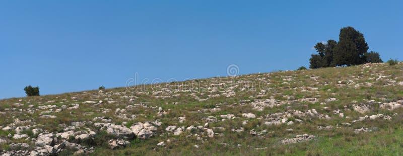 Pequeño grupo de árboles de la colina fotografía de archivo libre de regalías