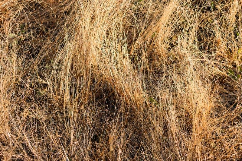 Pequeño herbaje seco en el campo que considera impresionante la mañana en la estación del invierno fotografía de archivo
