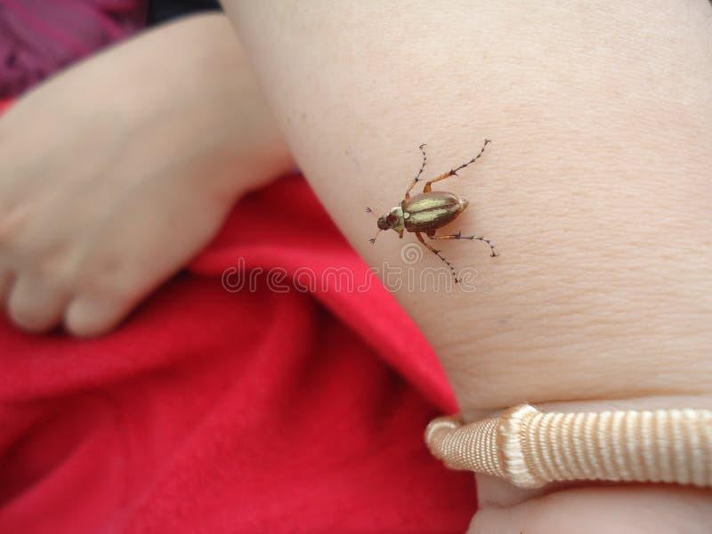 Pequeño insecto amistoso fotografía de archivo