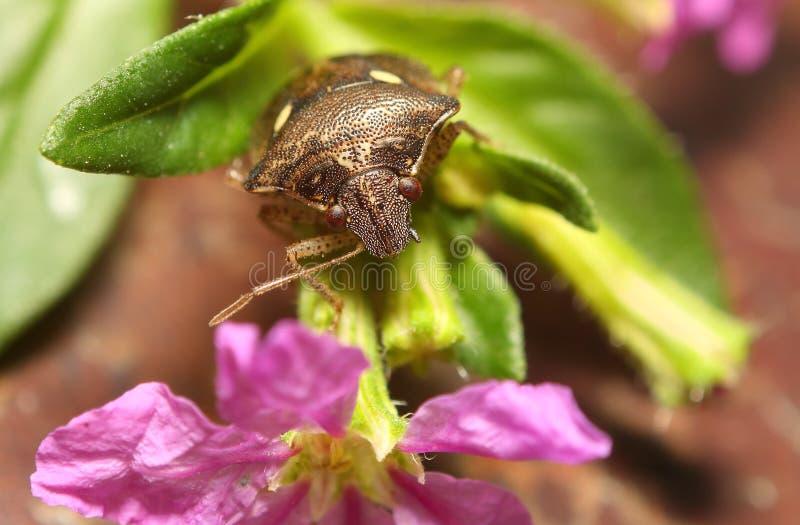 Pequeño insecto en jardín imagen de archivo