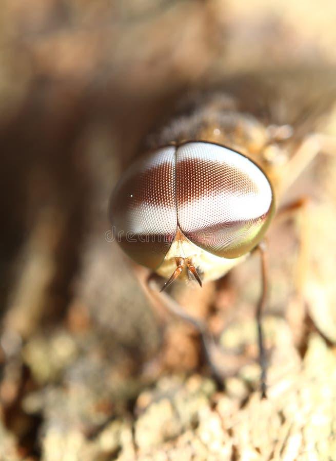 Pequeño insecto en jardín fotografía de archivo