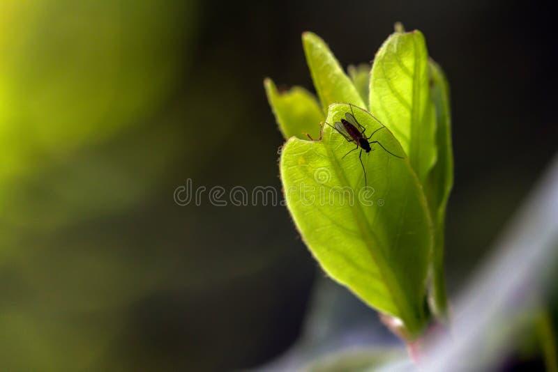 Pequeño insecto en una hierba imagen de archivo