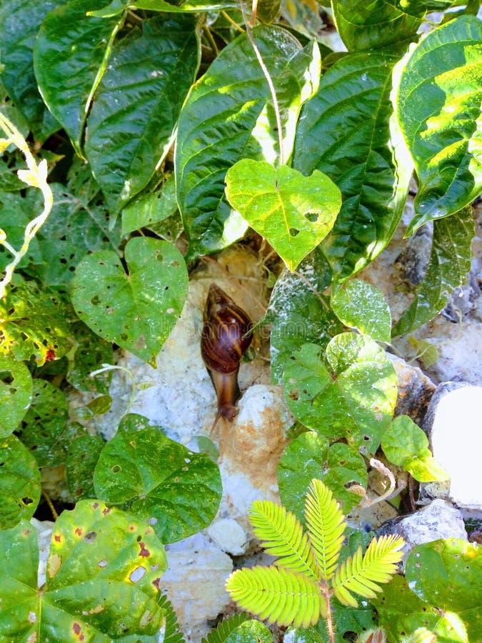 Pequeño jardín animal del caracol al aire libre imagen de archivo