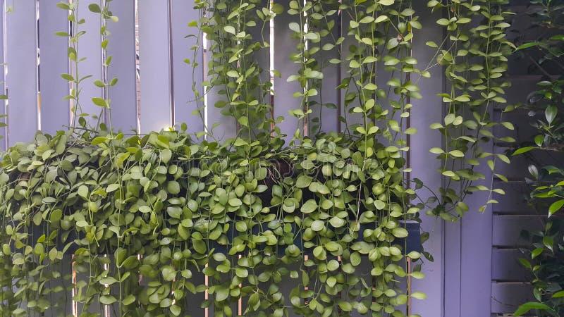 Peque o jard n vertical con el fondo de madera de la pared for Jardin vertical pequeno