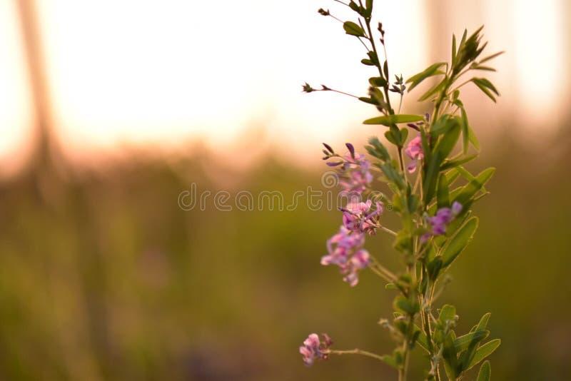 Pequeño Johnny salta encima de las flores foto de archivo libre de regalías