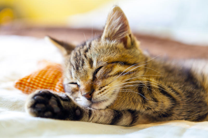 Pequeño Kitty foto de archivo libre de regalías