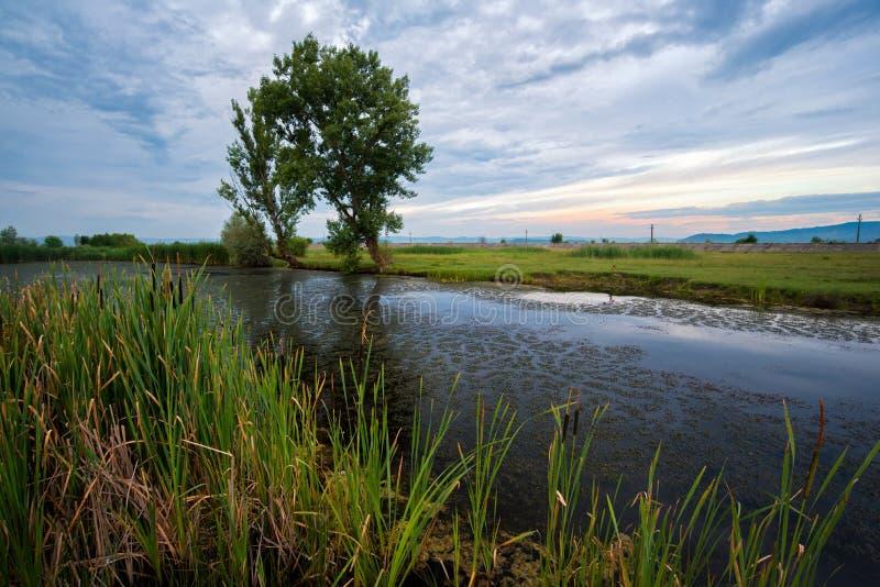 Pequeño lago cubierto con la mala hierba de charca en un área del pantano foto de archivo