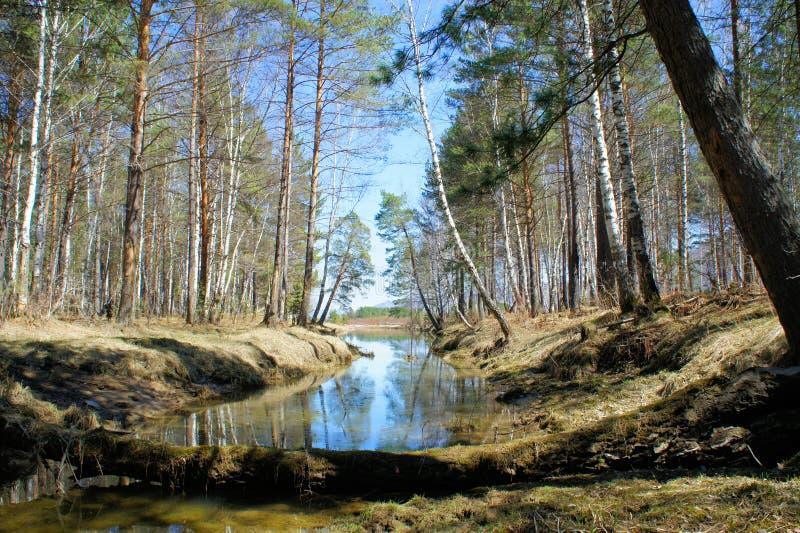 Pequeño lago de madera en el bosque Primavera imágenes de archivo libres de regalías
