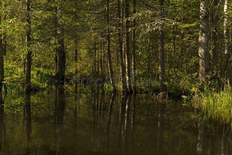 Pequeño lago del bosque en la sombra de árboles fotografía de archivo libre de regalías