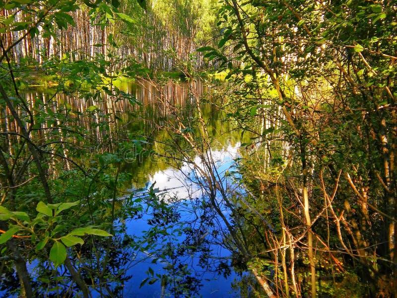 Pequeño lago en bosque fotografía de archivo