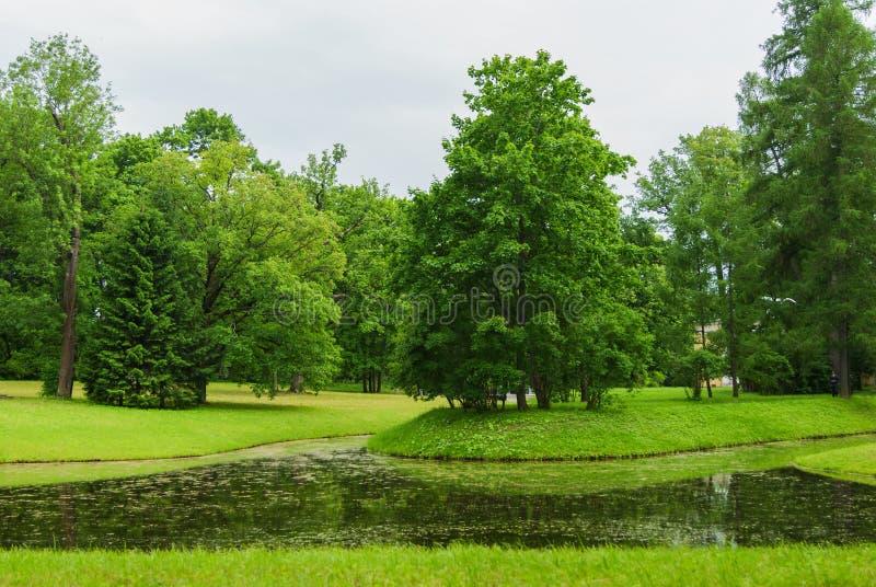 Pequeño lago en los árboles del Forest Green en el parque con el lago imágenes de archivo libres de regalías