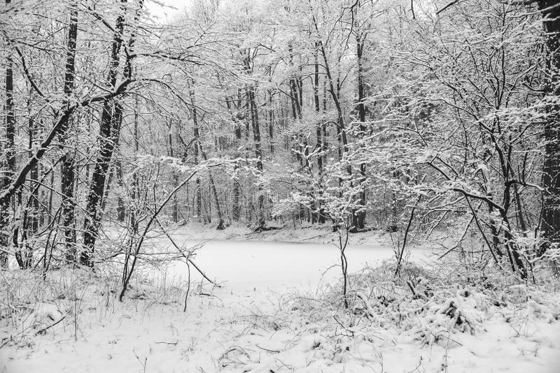 Pequeño lago en un la más forrest cubierta con nieve imagen de archivo libre de regalías