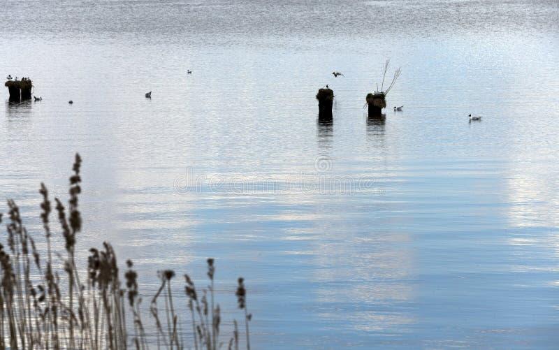 Pequeño lago Primavera fotografía de archivo libre de regalías