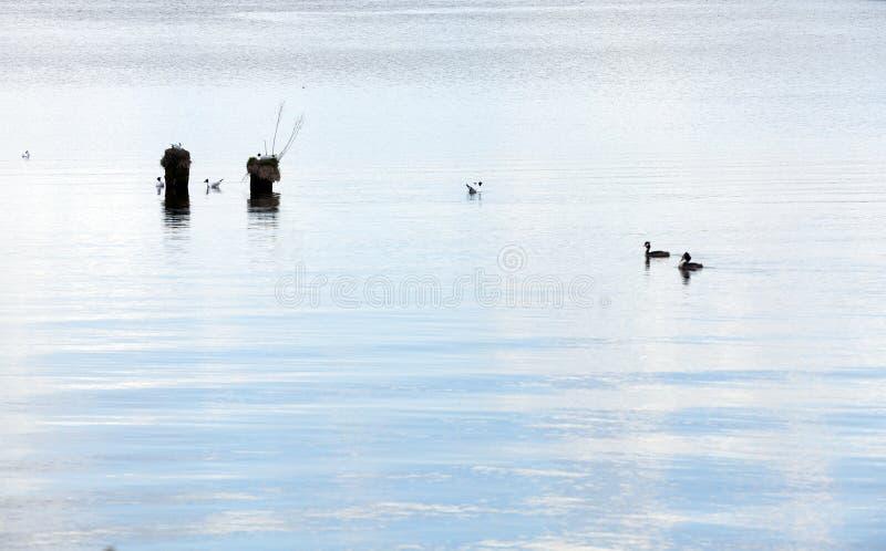 Pequeño lago Primavera fotos de archivo