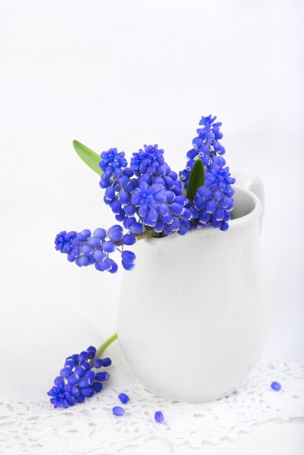 Pequeño manojo de jacintos de uva en el cordón blanco imagenes de archivo