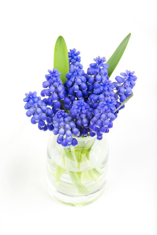Pequeño manojo de jacintos de uva en el florero imagen de archivo libre de regalías