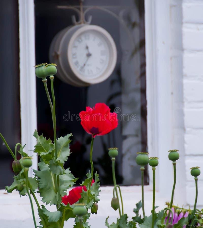 Pequeño mercado de arte de Rose Cute fotografía de archivo libre de regalías
