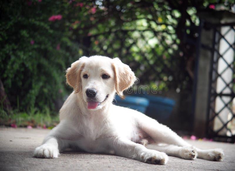 Pequeño mini perro de perrito precioso lindo joven del híbrido del tamaño imagen de archivo