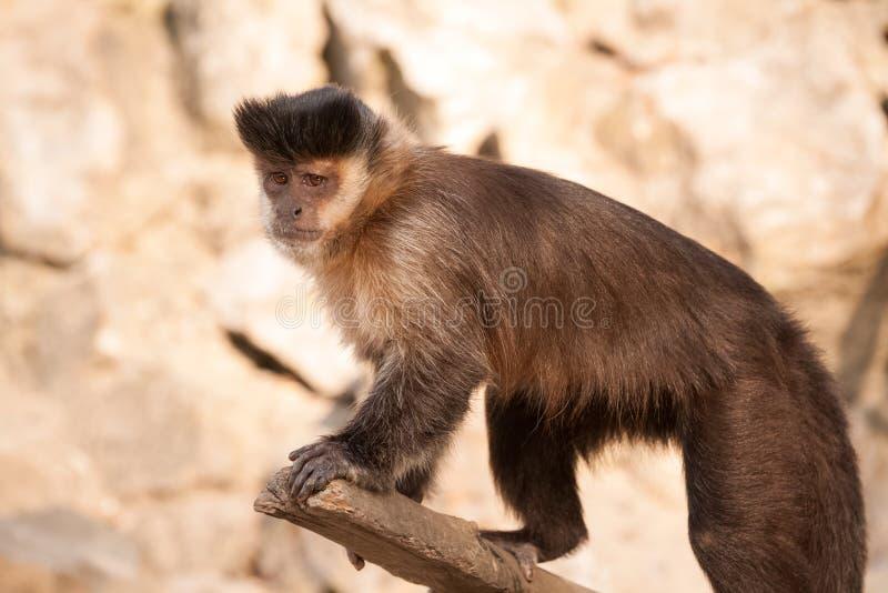 Pequeño mono dulce imagen de archivo libre de regalías