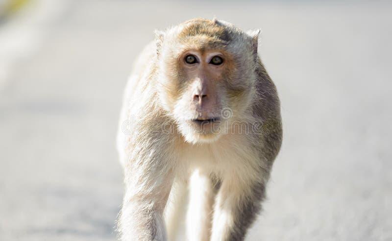 Pequeño mono que busca algo 5 fotografía de archivo libre de regalías