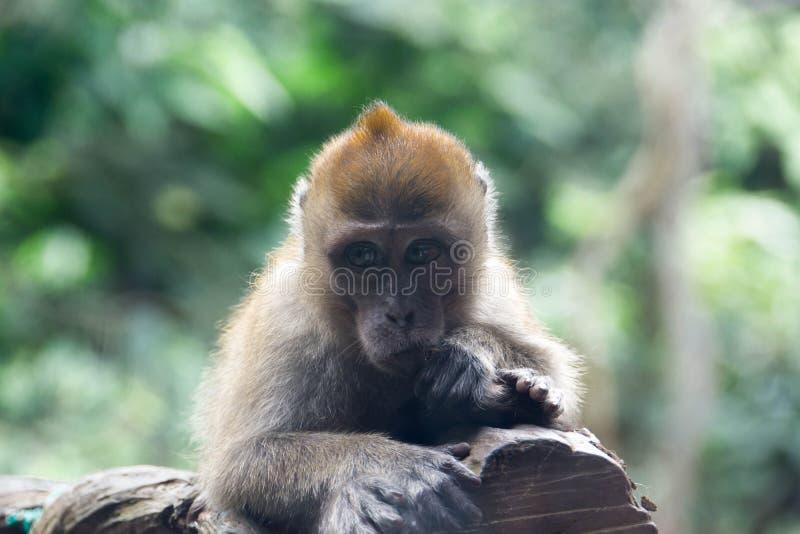 Pequeño mono que descansa sobre una rama de árbol fotos de archivo