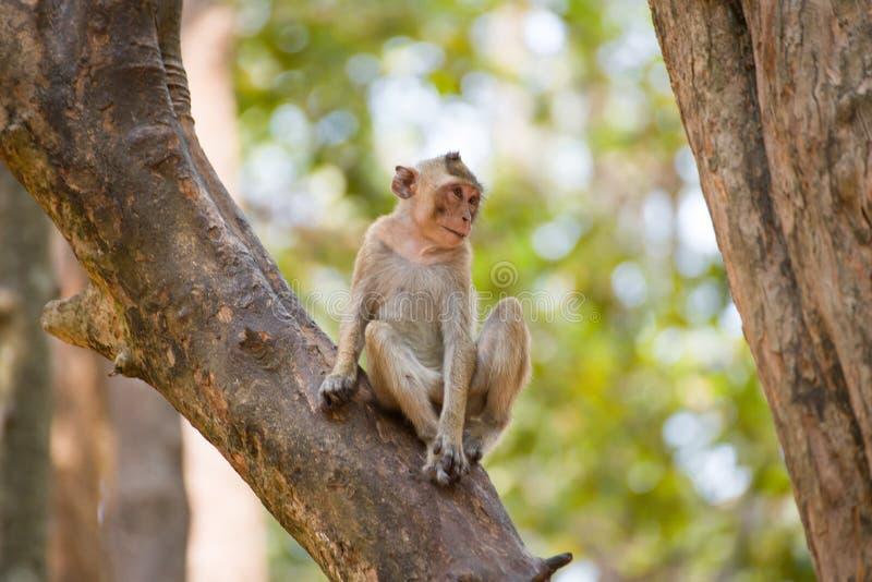 Pequeño mono que se relaja en árbol en Tailandia imagenes de archivo